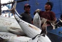 Ekspor Tuna di Bali Meningkat Tahun ini