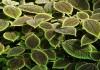 tanaman Ini Bermanfaat Bagi Kesehatan