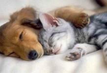 Anjing Atau Kucing yang Lebih Sayang Manusia