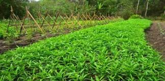Cegah Kerusakan pada Pertanian Gunakan Teknologi ini