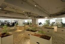 Gedung Perkantoran Disulap Menjadi Lahan Pertanian