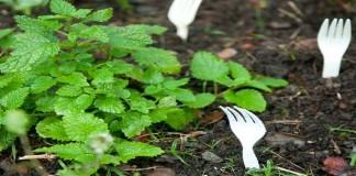 Inilah Beberapa Cara Berkebun yang Aneh