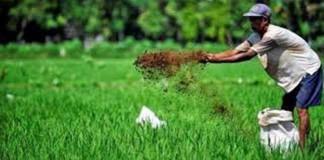 Italia Incar Sektor Pertanian Indonesia