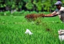 Kementerian Pertanian Fokuskan Sektor Pangan Untuk Aceh