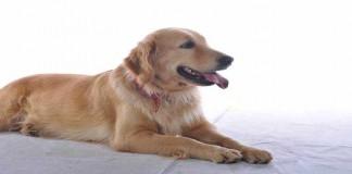 Kurangi Rasa Cemas Anak dengan Memelihara Anjing
