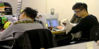 Menghilangkan Stres, Perusahaan ini Memperbolehkan Karyawan Bawa Peliharaan Ke Kantor