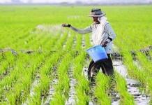 Petani Antisipasi Anjloknya Harga Gabah