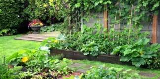 Yuk Membuat Pestisida Alami untuk Tanaman di Pekarangan Rumah