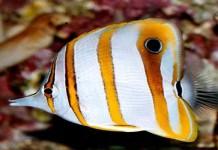 Benarkah Ikan dapat Menghilang