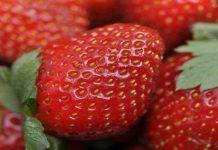 Benarkah Stroberi Lebih Kaya Vitamin C Ketimbang Jeruk