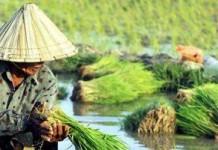 Indonesia Terancam Kekurangan Pangan 2030