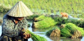 Indonesia Perlu Kurangi Campur Tangan Asing di Sektor Pertanian