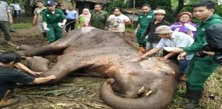 Kisah Tragis Gajah Mati di Kebun Binatang Bandung