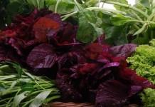 Lalapan Sayuran, Lebih Baik dikonsumsi Saat Mentah Atau Matang