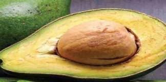 Mengenal Kandungan lavonoid dalam Avokad