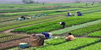 Mengenal Pertanian Organik