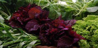 Pasar ini Jual Produk Organik dengan Harga Murah