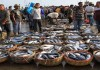 Pemerintah Buka Pelabuhan Ekspor Ikan