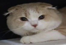 Penting! Jangan Asal Memberi Makan Kucing