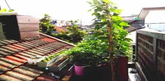 Tips Membuat Taman di Atap Rumah