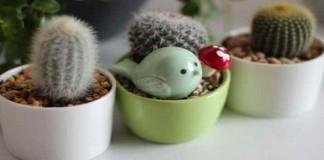 Tips Merawat Kaktus Hias