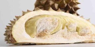 Trenggalek Memiliki Kebun Durian Terluas di Indonesia