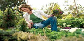 Waspada! Bahan-Bahan Berkebun Sebabkan Kanker Payudara