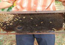 Ingin Budi Daya Lebah Lakukan Hal ini Dulu!