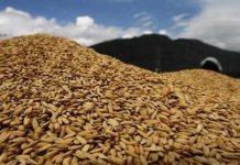 Kementan Keran Impor di Buka, Petani Tak Perlu Khawatir