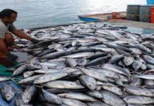 Punya Julukan Negara Maritim, Indonesia Masih Impor Ikan