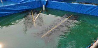 Membuat Pakan Ikan Terapung dengan Mesin Ekstruder