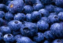 Mengenal Khasiat Blueberry