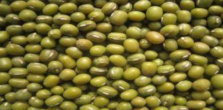 Panduan Lengkap Budi Daya Kacang Hijau