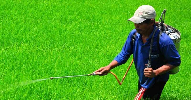 Menekan Biaya Produksi Pertanian Dengan Membuat Herbisida Sendiri