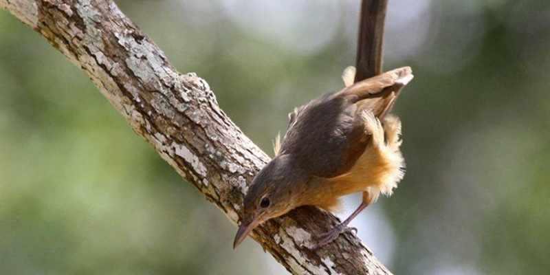 Waspada Burung Burung Ini Memiliki Racun Berbahaya Artikel Pertanian Terbaru Berita Pertanian Terbaru