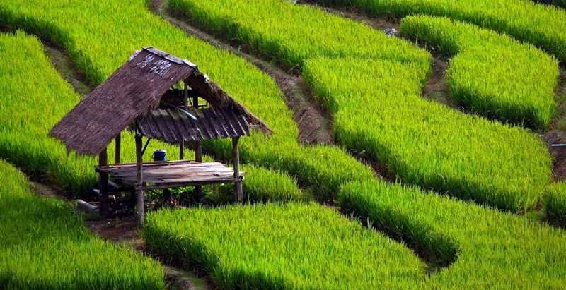 Sektor Pertanian Indonesia Terbaik Nomor 25 Dunia Artikel