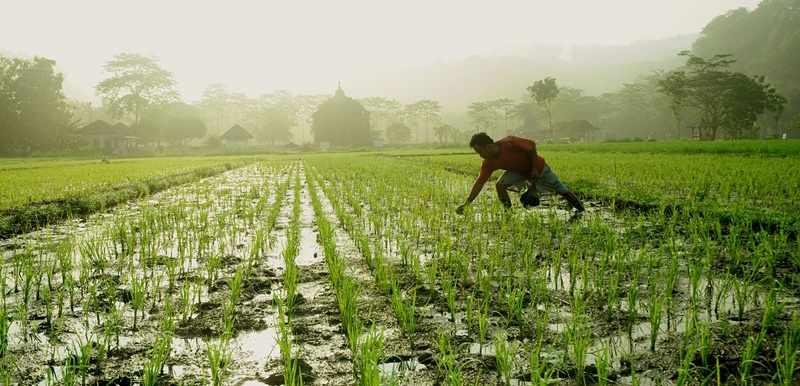 Jepang Ingin Jajaki Sektor Pertanian Indonesia Artikel Pertanian