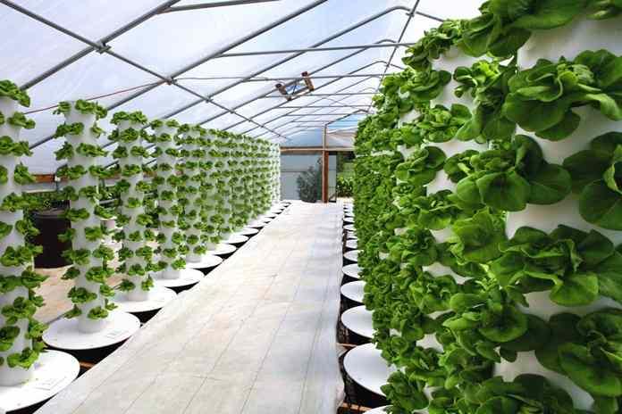 Mencoba Bercocok Tanam Dengan Metode Vertikultur Seperti Apa Ya Artikel Pertanian Terbaru Berita Pertanian Terbaru