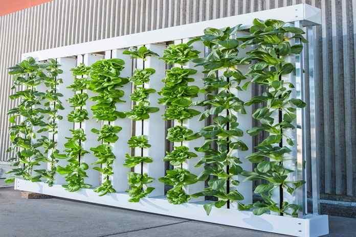 Mengenal Model Hidroponik Pertanian Modern Masa Kini Artikel
