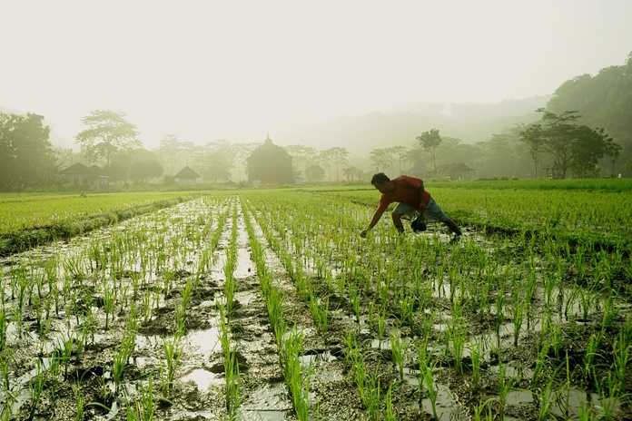 Sektor Pertanian Bukan Hanya Urusan Petani Artikel Pertanian