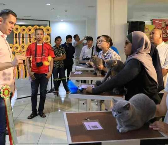 international cat show