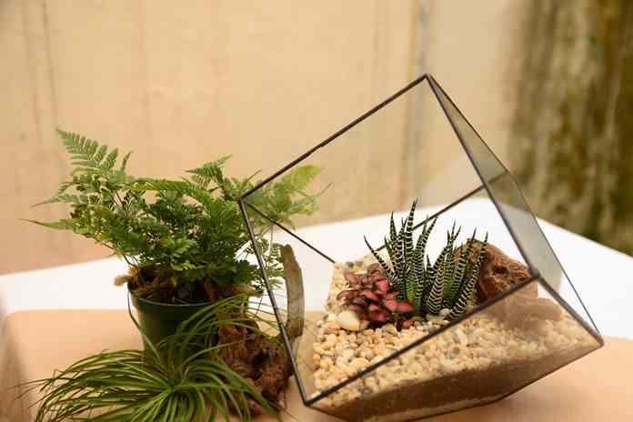 merawat terrarium