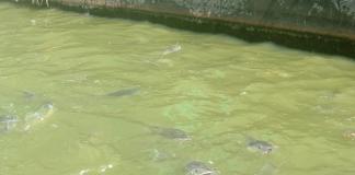 tiga kolam untuk kelompok tani