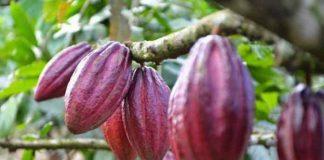Indonesia krisis petani