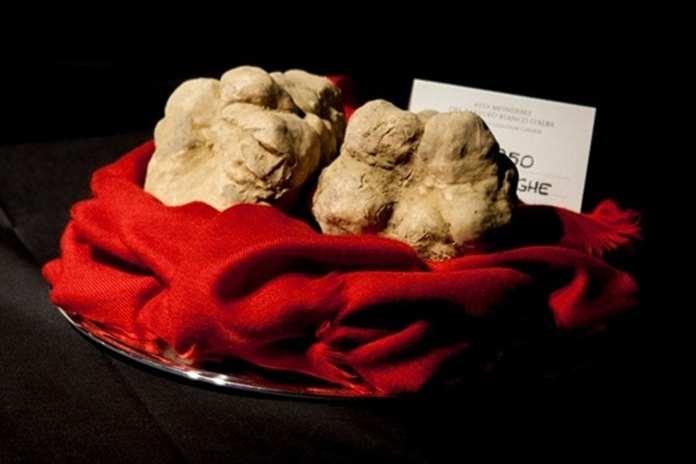 jamur truffle putih