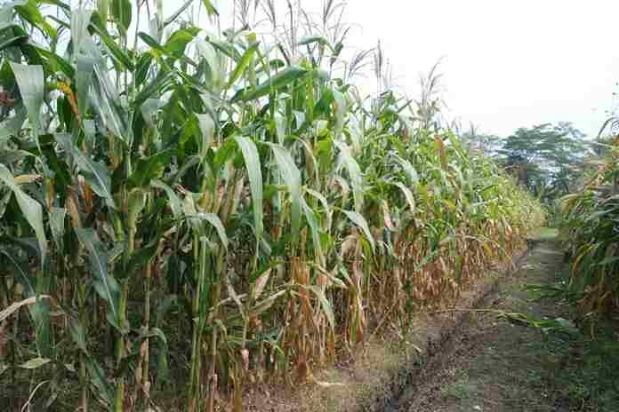 kebijakan ketahanan pangan