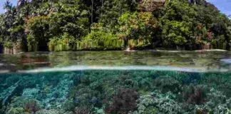 terumbu karang indonesia