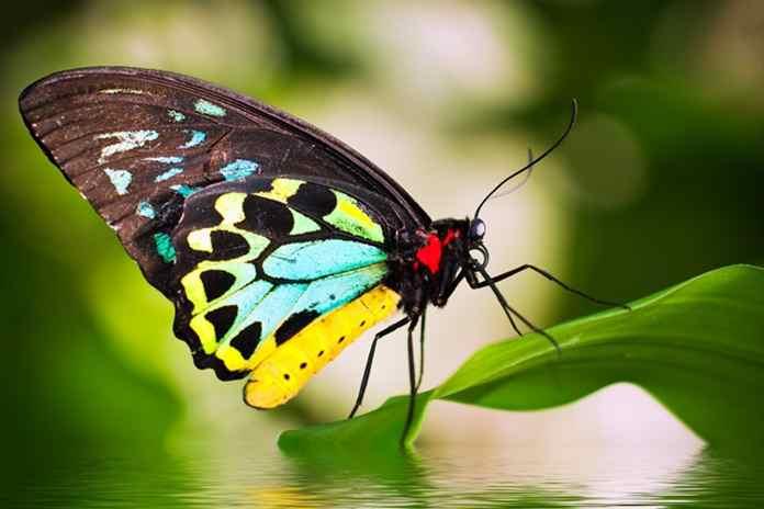 penyelundupan 2.800 kupu-kupu langka