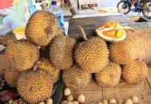 menjual ribuan durian