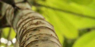 semut dan pohon bersahabat